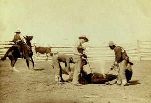 cowboys branding cattle