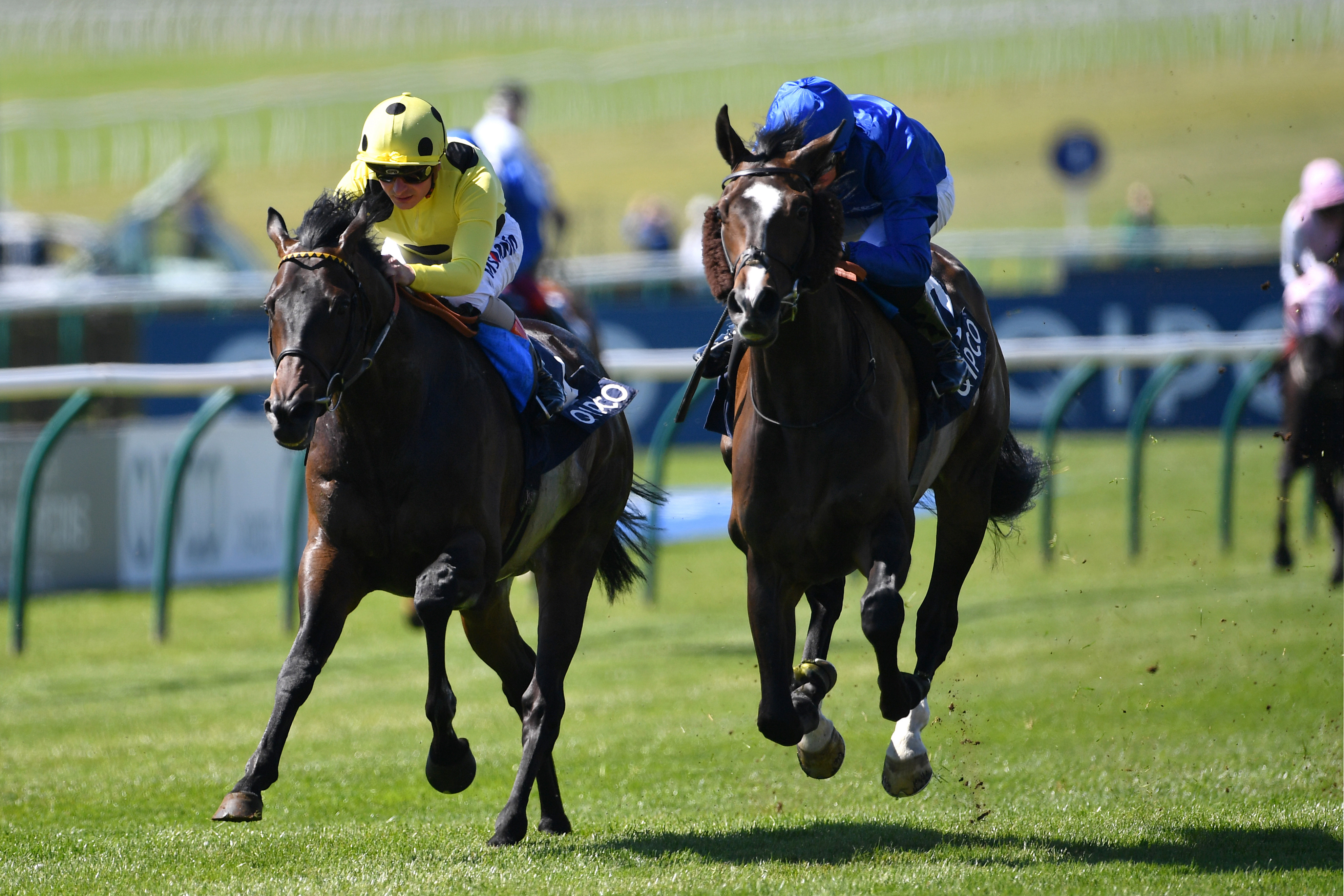 Sharja Bridge (left) should will find this a lot easier than his Queen Anne run