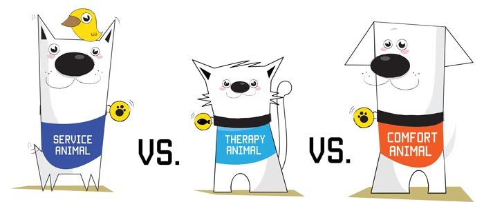 types of therapy animals