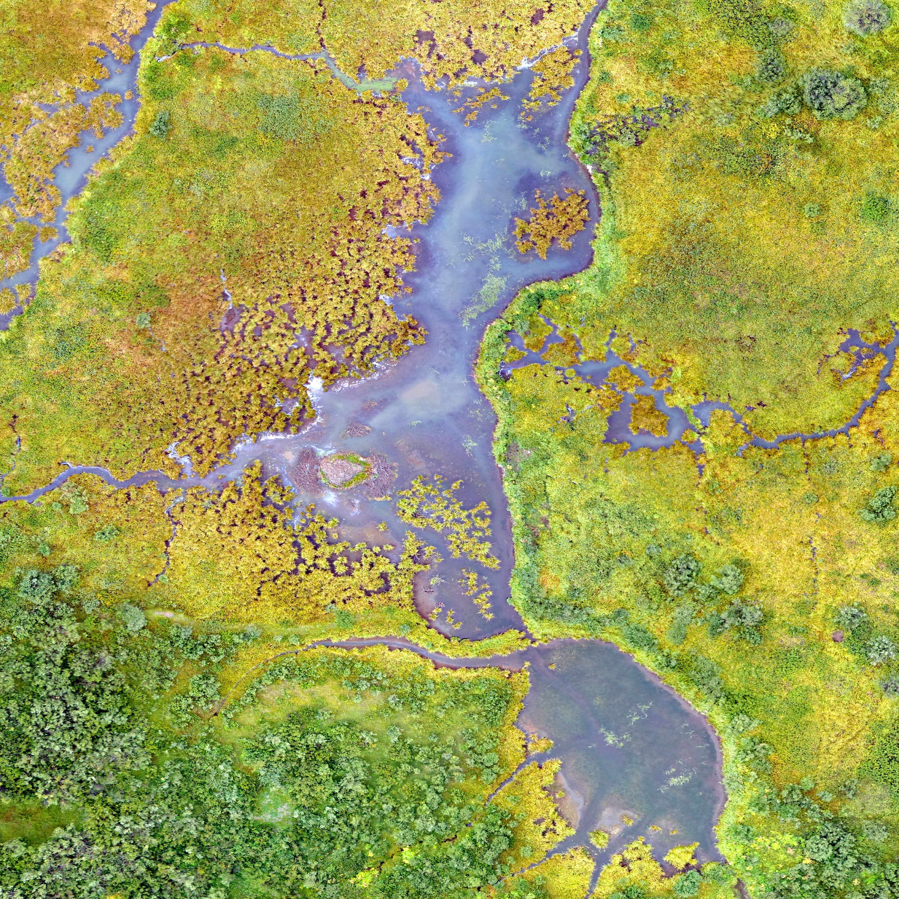 Wetlands have a unique beauty when viewed from above. This natural colour drone image shows the intricate interactions of forest and surface water in this high-altitude wetland called a fen in the Rocky Mountains of Colorado. Wetlands enhance water quality and provide habitats for diverse plant and animal species. Drones help with mapping fens for conservation and restoration studies.
