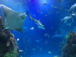 Sea Life Michigan Aquarium - In the Walkthrough Tunnel