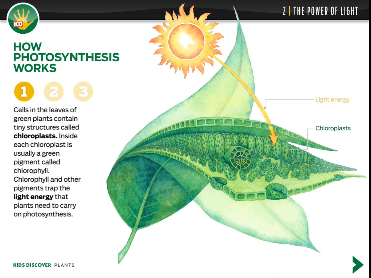 Kids Discover's Plants for iPad is an interactive eBook packed with lots of great educational content.