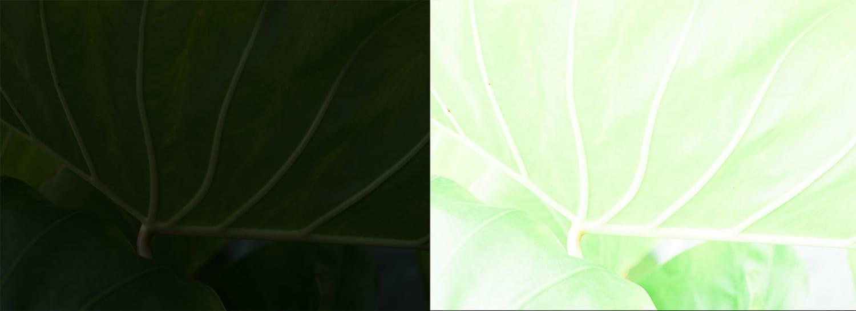 dodging-burning-mishra-leaf-extreme-exposures