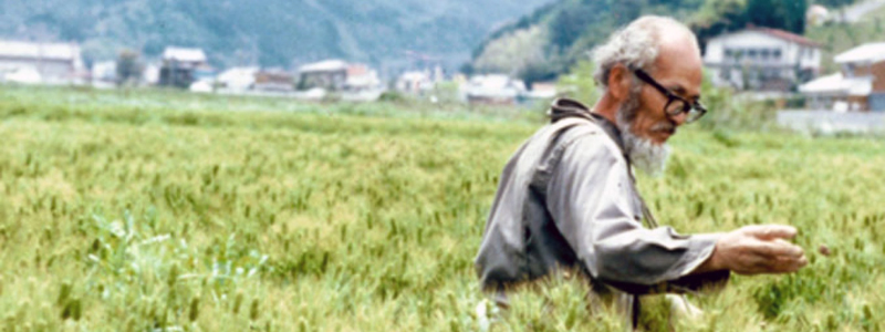 Masanobu Fukuoka, a Japanese farmer and philosopher celebrated for his natural farming and re-vegetation of desertified lands.
