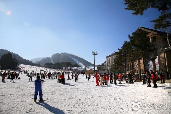 winter activities in korea Yongpyong Ski Resort