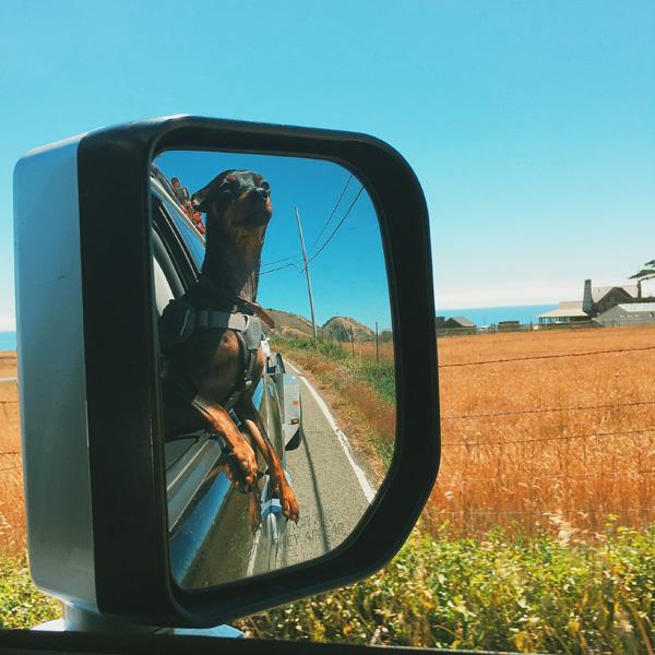 pch dog in mirror