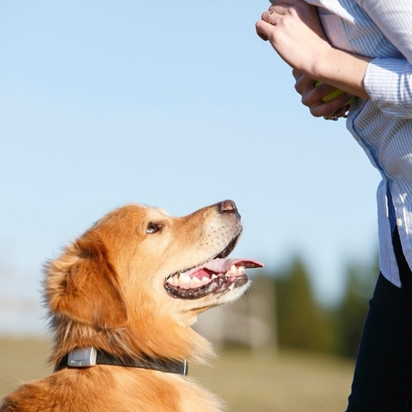 15 Vacation Risks You Might Not Recognize Threaten For Your Dog