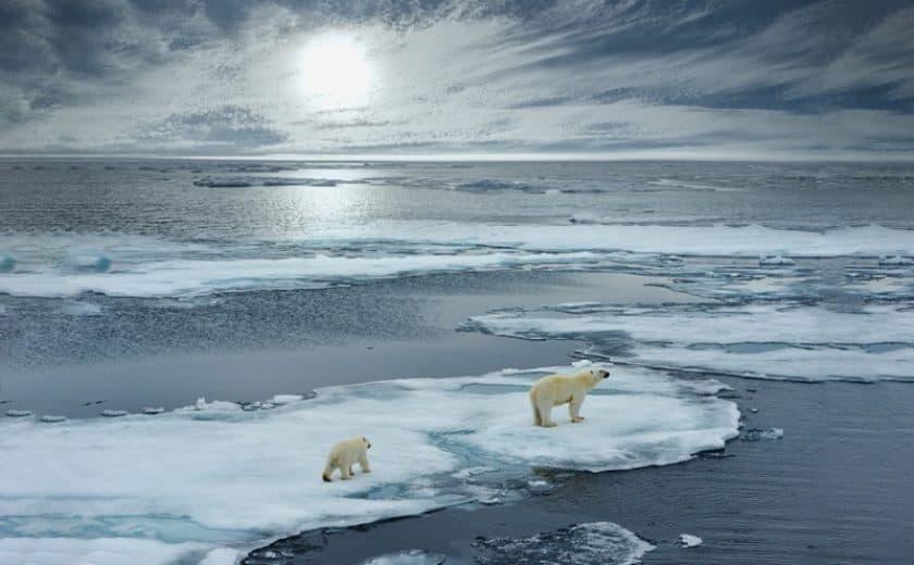 Polar Bear with cub walking on ice