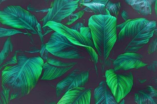 close up of green leafy plant