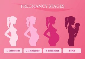 Changes in a woman's body in pregnancy