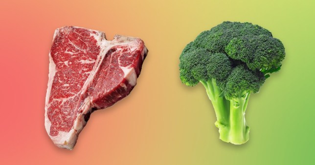 vegetable protein meat protein