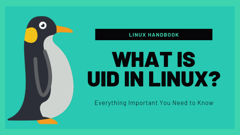 Linux I d command: 5 Practical examples