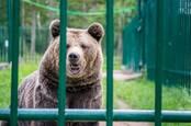 Fancy Bear Linux rootkit • The registry