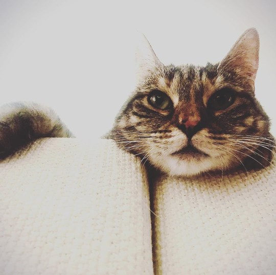 Ricky Gervais and Jane Fallon's new pet cat Pickle