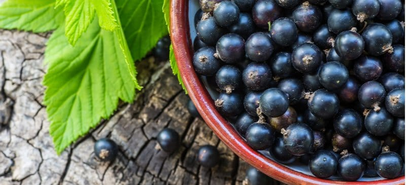 Black Currant Benefits, Nutrition, Uses, History and Recipes