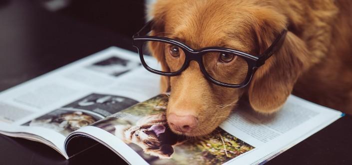 Funny knock-knock jokes - dog jokes