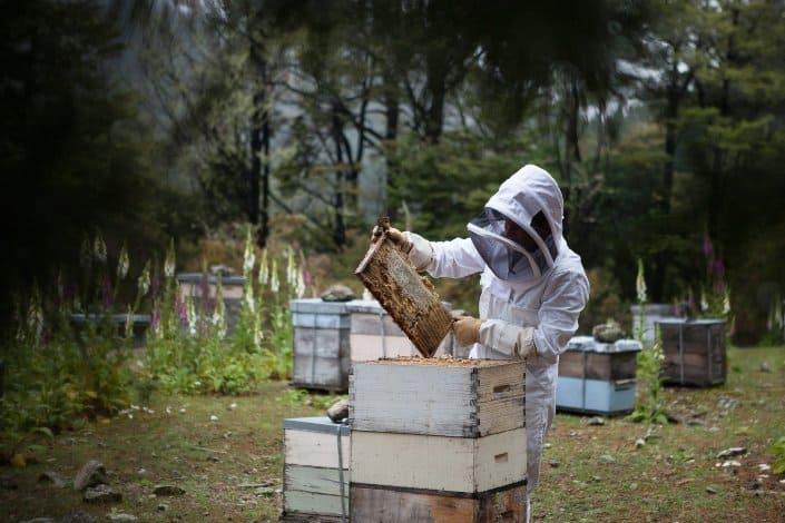 Honeybee die_ beautiful and open honeybee, do you want