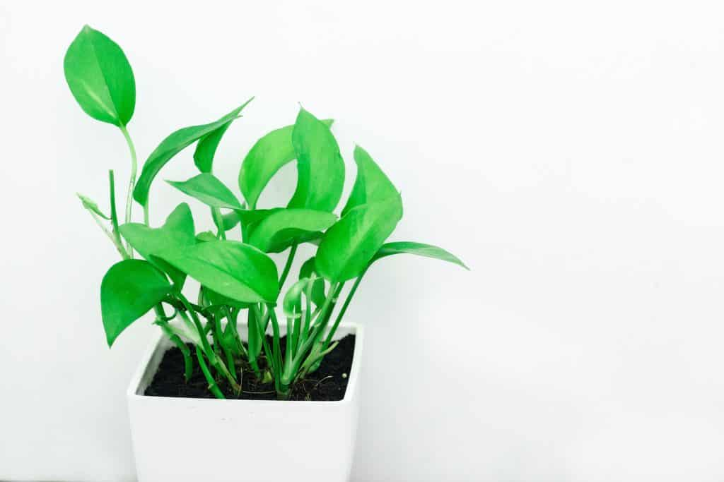 http://server.digimetriq.com/wp-content/uploads/2020/12/1608077172_731_Elegant-and-Trendy-Plants-for-Your-Living-Room.jpg