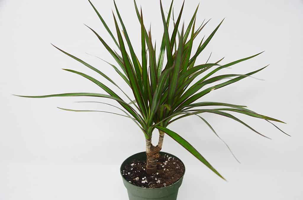 http://server.digimetriq.com/wp-content/uploads/2020/12/1608077173_50_Elegant-and-Trendy-Plants-for-Your-Living-Room.jpg