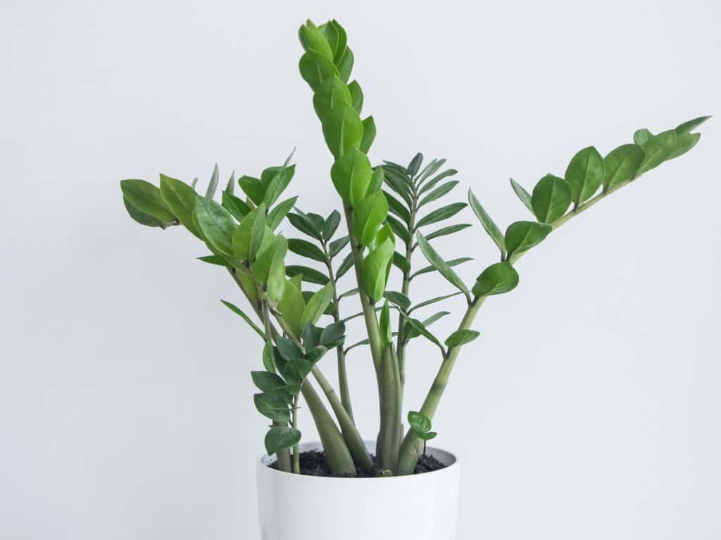 http://server.digimetriq.com/wp-content/uploads/2020/12/1608077173_844_Elegant-and-Trendy-Plants-for-Your-Living-Room.jpg