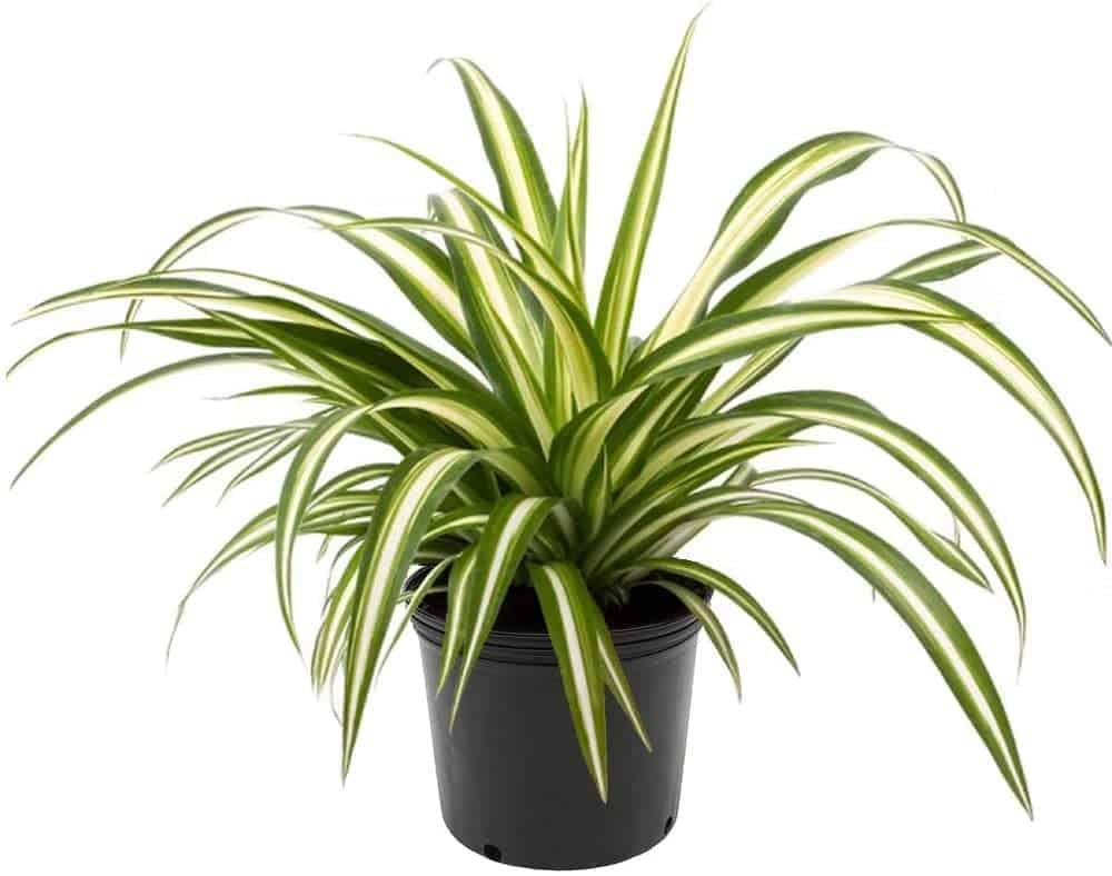 http://server.digimetriq.com/wp-content/uploads/2020/12/1608077173_923_Elegant-and-Trendy-Plants-for-Your-Living-Room.jpg