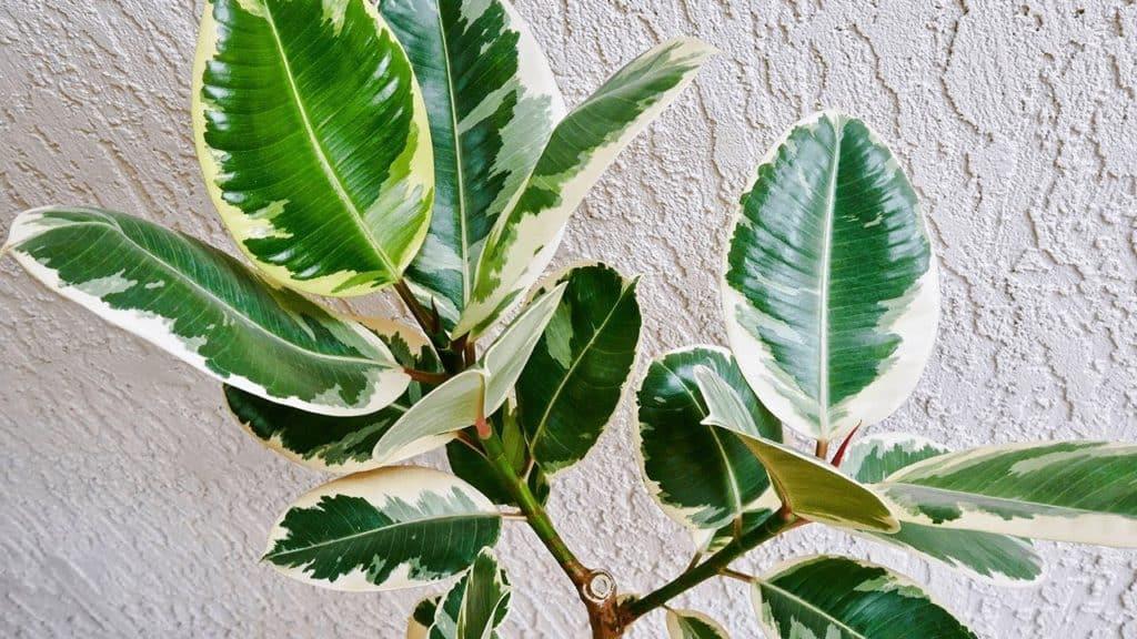 http://server.digimetriq.com/wp-content/uploads/2020/12/1608077174_70_Elegant-and-Trendy-Plants-for-Your-Living-Room.jpg