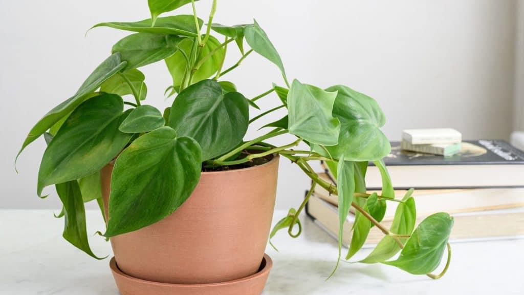 http://server.digimetriq.com/wp-content/uploads/2020/12/1608077174_197_Elegant-and-Trendy-Plants-for-Your-Living-Room.jpg