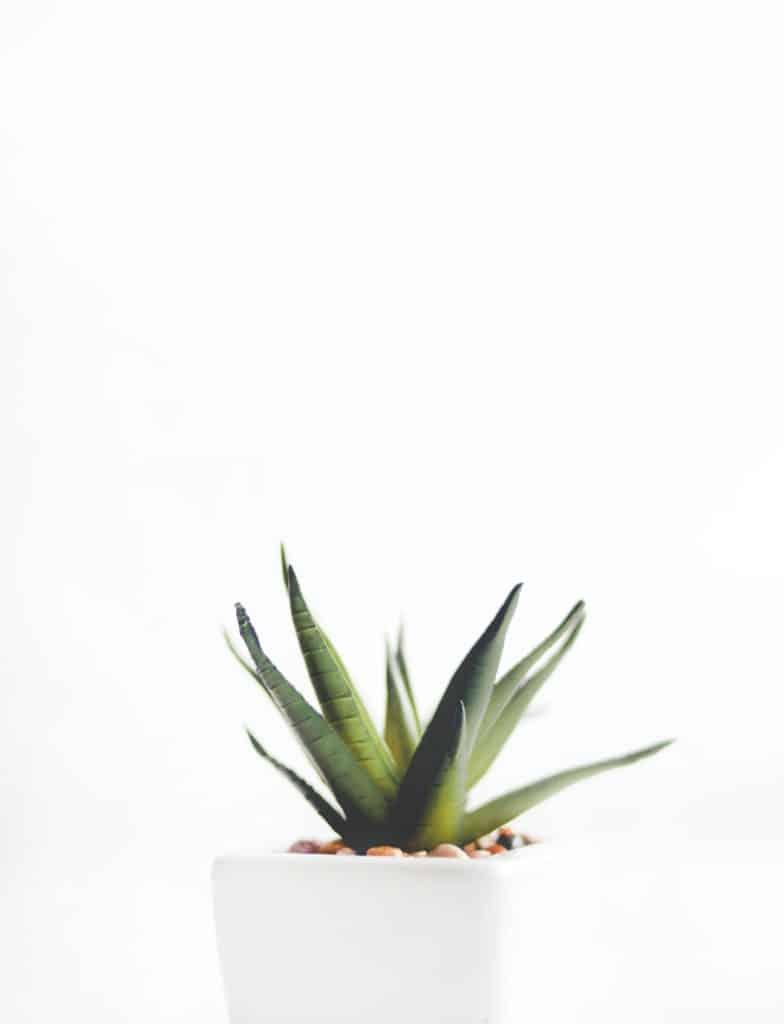 http://server.digimetriq.com/wp-content/uploads/2020/12/1608077175_344_Elegant-and-Trendy-Plants-for-Your-Living-Room.jpg