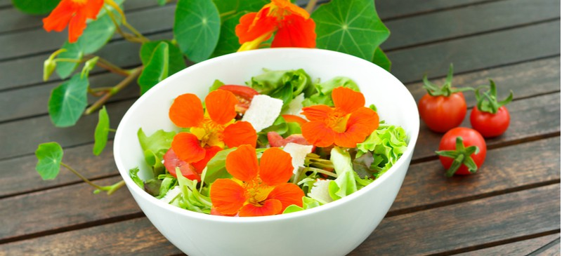 Nasturtium Uses, Benefits, Recipes, How to Grow and More