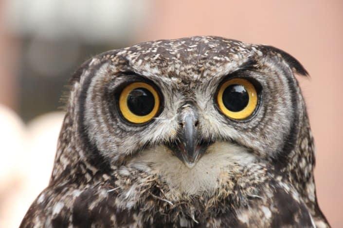 Who's Twit Twit who heard an owl...