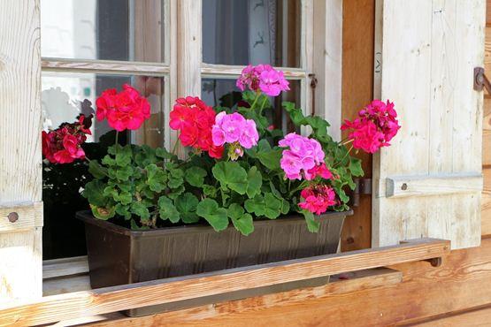 Window flowerpot