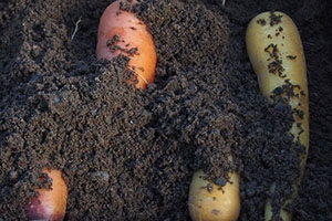 How to preserve vegetables with sand