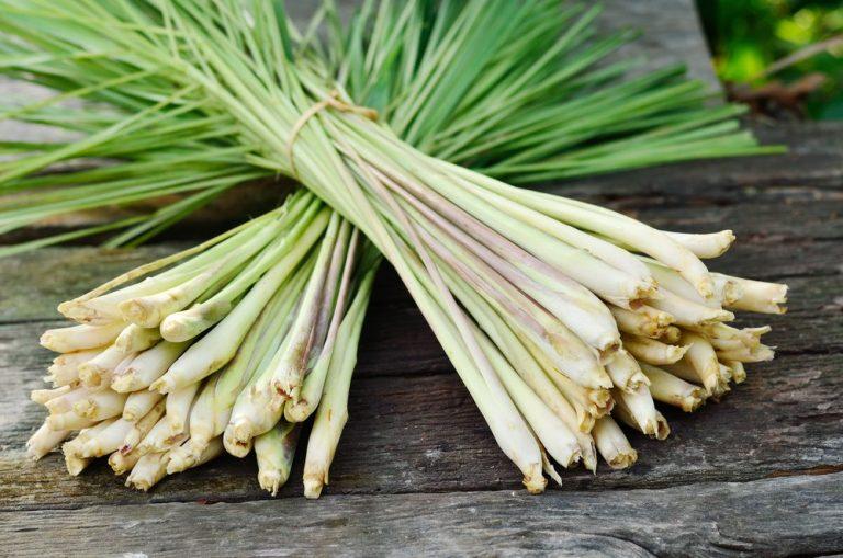 15 Surprising Health Benefits of Lemongrass
