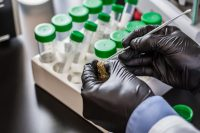 Lab Shopping: Highlighting the Need for Checks and Balances in Cannabis