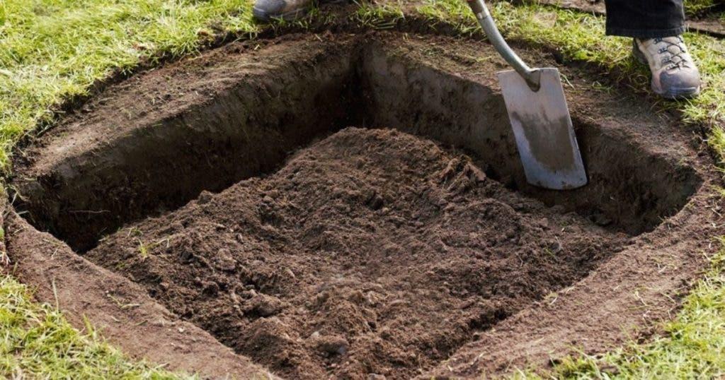 Les arbres devraient être plantés dans des trous carrés pour pousser plus rapidement et être plus grands